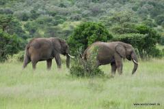 Masai Mara in Bildern - Safari in Kenia