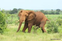 Tsavo-Ost-Nationalpark  in Bildern - Safari in Kenia