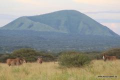 Tsavo-West-Nationalpark  in Bildern - Safari in Kenia
