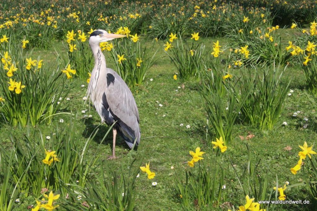 Vogel meets Blumen im St. James Park.