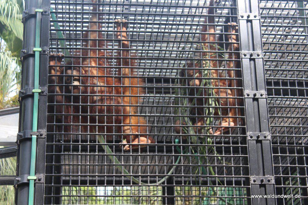 Affen im Zoologischen Garten