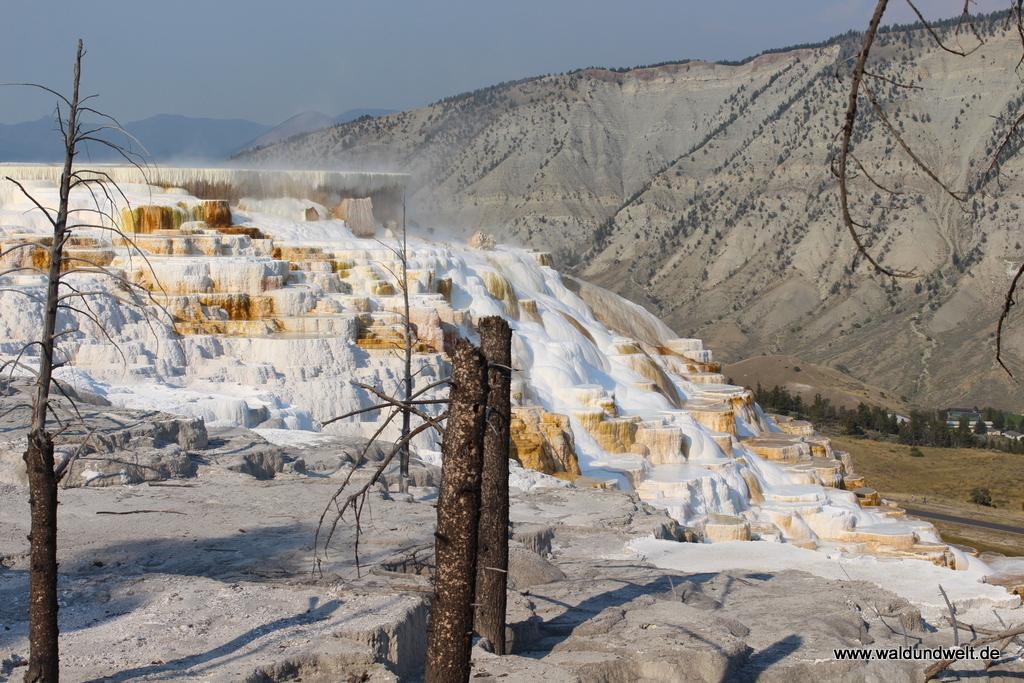 Terrassen der Mammoth Hot Springs