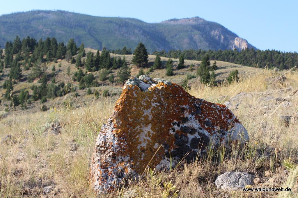 Landschaft im Yellowstone Nationalpark
